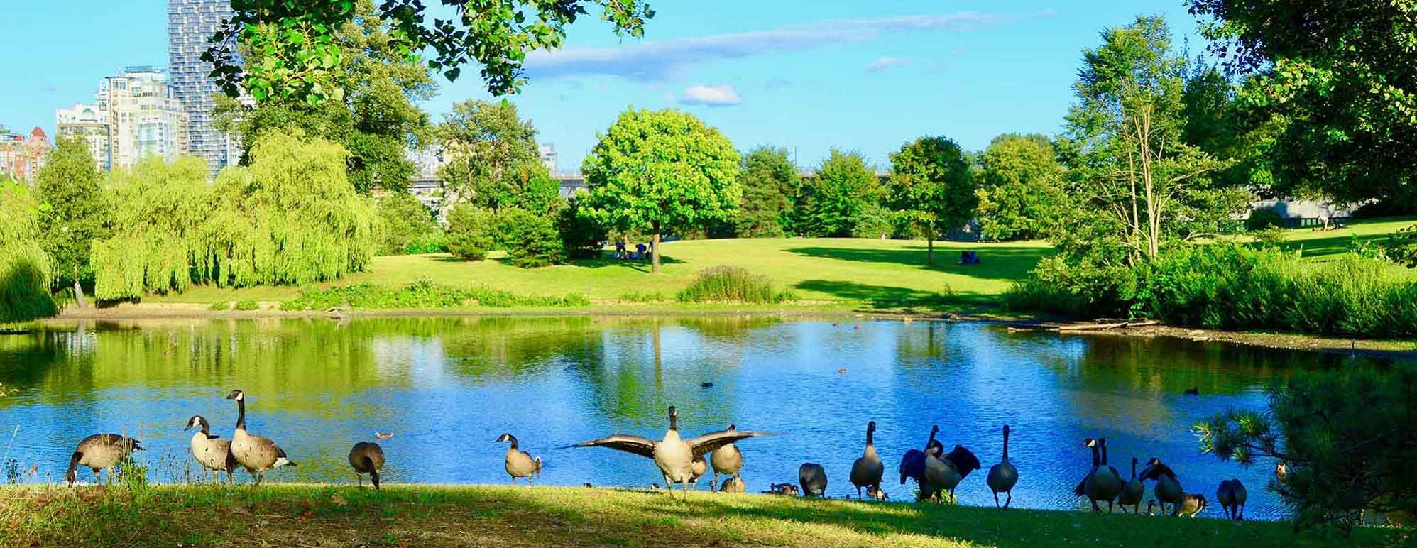 Vanier Duck Pond